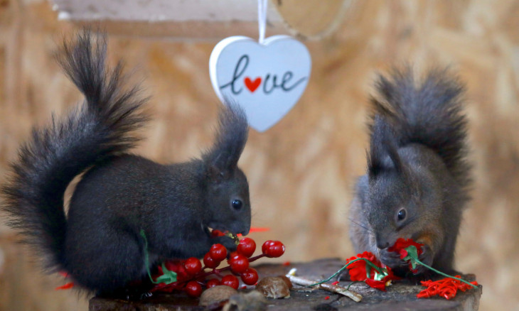 Staff at Skopje Zoo organizes a Valentine's day party for the squirrels in Skopje