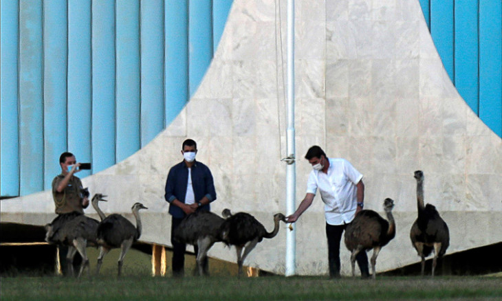 Brazil's President Jair Bolsonaro feed a group of rheas