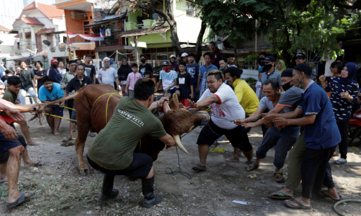 Volunteers struggle to control the bull during a ritual sacrifice