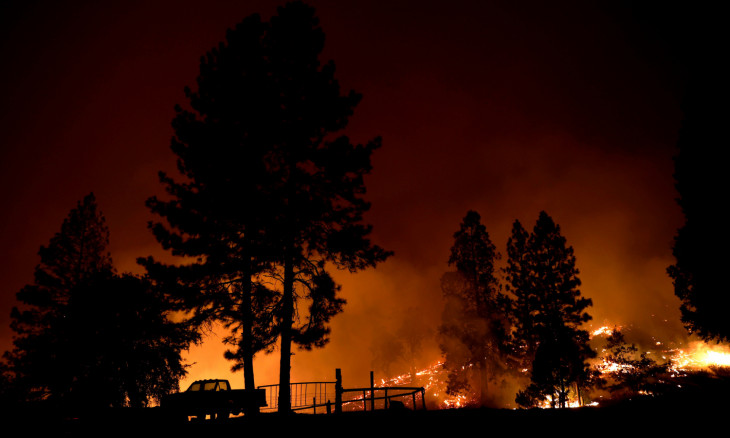 A tree engulfed in flames is seen during the Creek Fire
