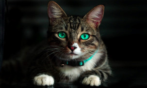 Brown cat with green eyes.