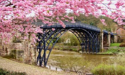 Cherry blossom tree beside black bridge.