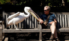 A man is seen with pelican in St James's Park