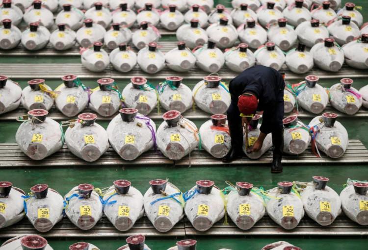 Japan's famous Toyosu fish market