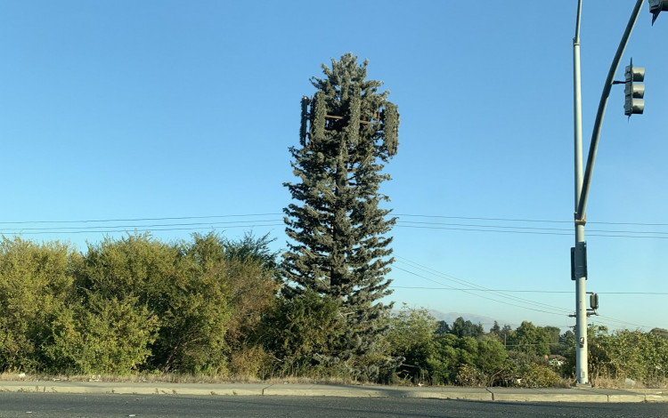 cell tower disguised as a tree