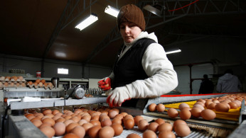 A worker sorts eggs at a chicken farm in Brudnice, central Poland January 21, 2013.
