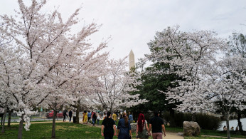 People enjoy the warm weather and blooming cherry blossoms by the Tidal Basin near the Washington Monument, in Washington, U.S. March 27, 2021.