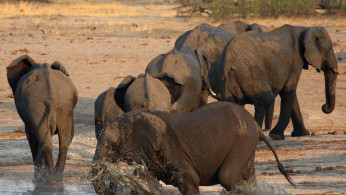 FILE PHOTO: A group of elephants are seen at a watering hole inside Hwange National Park, in Zimbabwe, October 23, 2019.
