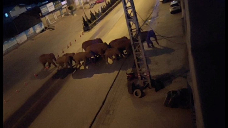 FILE PHOTO: A herd of elephants walk along a road in Eshan, Yunan, China, May 27, 2021 in this still image taken from video obtained from social media.